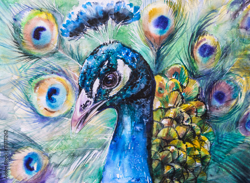 Portrait of peacock.Picture created with watercolors. - 110711262