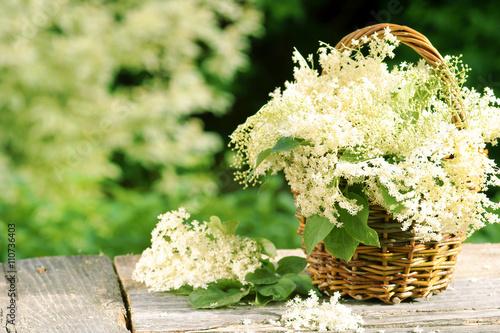 Leinwanddruck Bild elder, Holunder, Holunderblüten, im Körbchen, vor Holunderstrauch, Copyspace