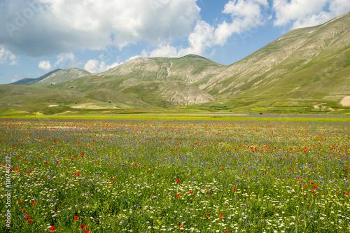 Fototapeta Castelluccio di Norcia Italy
