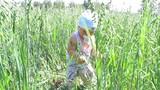 a kid plays in a field of grain