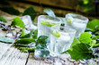 Cold Russian vodka, on birch buds, crushed ice birch leaves, vin