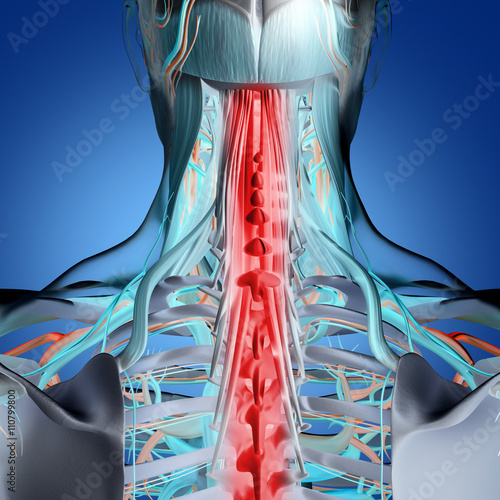 Human Anatomy Neck And Spine Pain 3d Illustration Buy Photos
