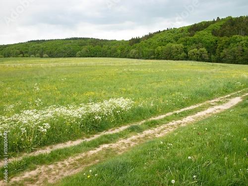 Zdjęcia na płótnie, fototapety, obrazy : Feldweg durch grüne Felder mit Blumen im Frühling am Rande des Krofdorfer Forst in Hessen