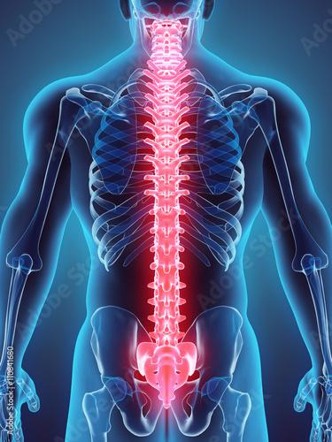 Fototapeta 3D illustration of Spine, medical concept.