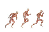 Running cycle. Anatomical illustration. Isolated. Contains clipp