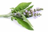Feuille et fleur de sauge - 110888083