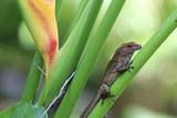 Brown lizard climbing a plant, macro