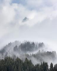 brume sapin montage brouillard altitude alpes voile paysage froi