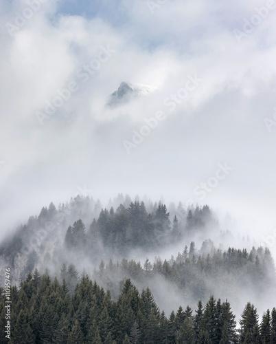 brume sapin montage brouillard altitude alpes voile paysage froi - 110957476