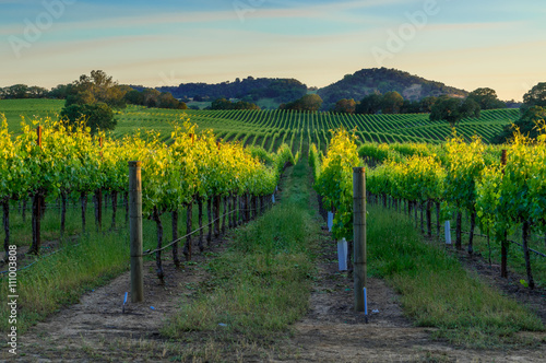 Foto op Canvas Wijngaard Sunset in the vineyards of Sonoma
