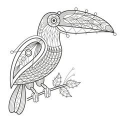 Adult coloring. Bird toucan.