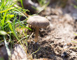 Mushroom in the grass on the nature
