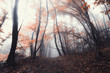 vivid autumn forest foliage