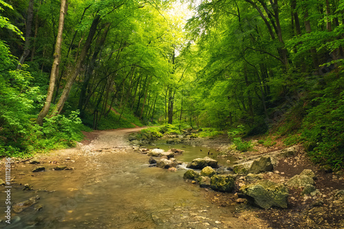 Flowing stream in forest with path.