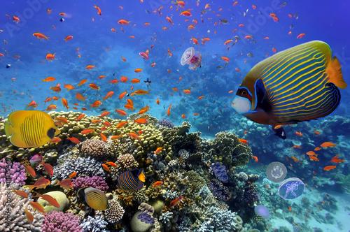 rafa-koralowa-i-tropikalna-ryba-w-morzu-czerwonym