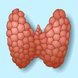 Healthy thyroid gland on blue background