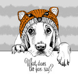 Pies Basset Hound w czapce