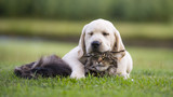 cat and dog friendship - 111230457