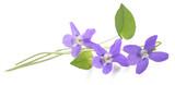 Violet - 111234291