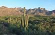 Arizona Desert Mountains and Cactus Landscape