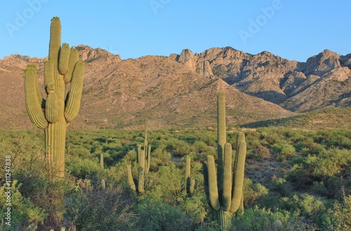 Poster Arizona Arizona Desert Mountains and Cactus Landscape