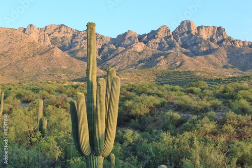 Deurstickers Arizona Arizona Desert Mountains and Cactus Landscape