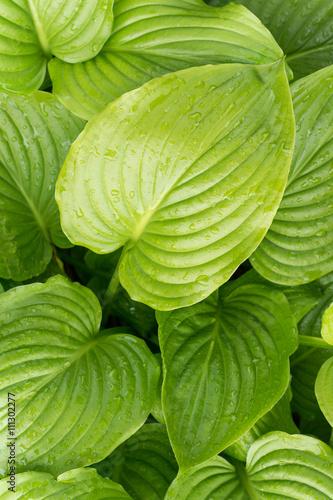 Poster Landschappen Green leaf background copy space
