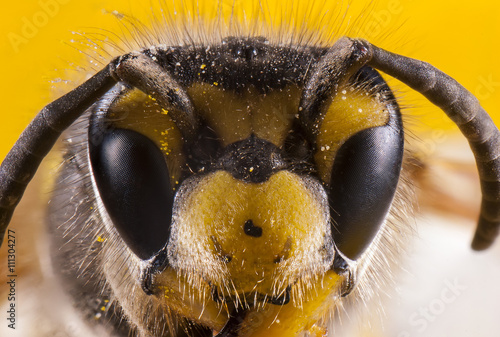 Zdjęcia na płótnie, fototapety, obrazy : Bees face macro shot.