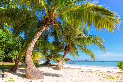 Morning tropical beach at Praslin island, Seychelles. Fashion travel and tropical beach concept.