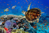 colorful coral reef with many fishes and sea turtle - 111371022