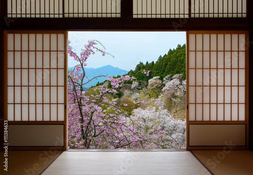 Fototapeta Japanese sliding doors and beautiful landscape of cherry trees in spring