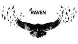Flying raven double exposure.