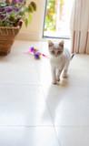 pequeño gato mascota