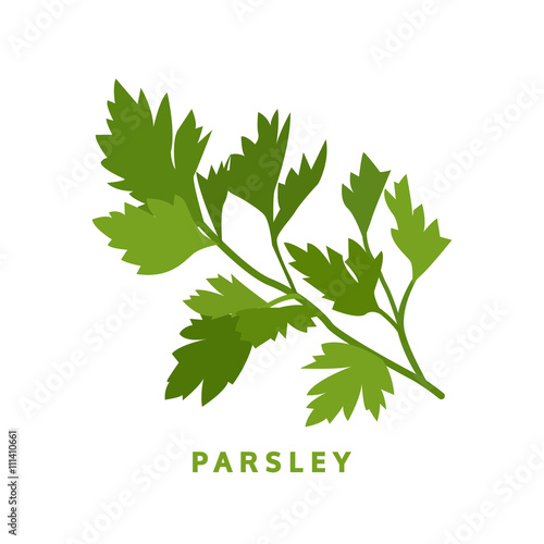 parsley herb, food vector illustration, isolated logo