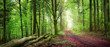 Forstweg im grünen Wald bei sanftem Licht. Panorama