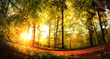 Bäume von der untergehenden Sonne in goldenes Licht getaucht