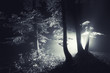 night in forest with magical light