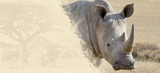 Rhino on textured paper