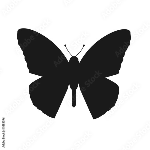 Insects Butterflies Isolated on White Background