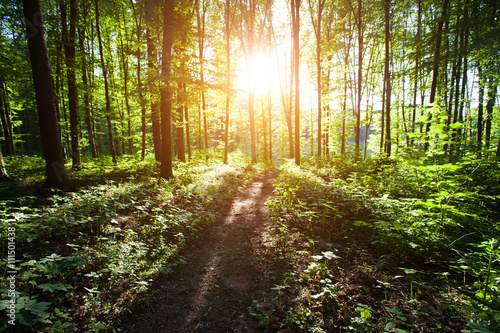 Forest with sunlight during sunset