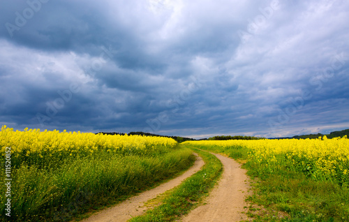 Rape field and gray clouds .