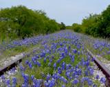 Bluebonnet Railroad/Texas Bluebonnet flowers growing over railroad tracks.