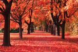 color autumn forest - 111579603