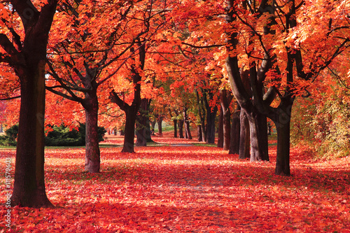 Fotobehang Rood color autumn forest