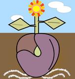Semilla plantada en la tierra que ha germinado en una bella flor.