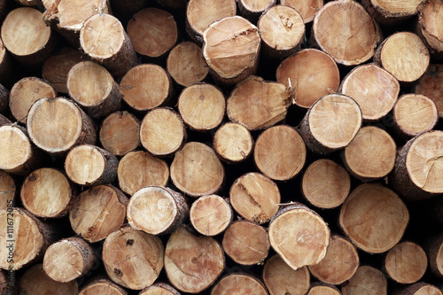 Pile of wood logs. Wood logs texture background Poster