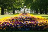 Fototapety Saxon Garden