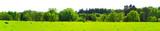 Kuhwiese am Waldrand im Frühling