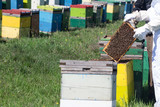 beekeepers checking the beehives - 111881857