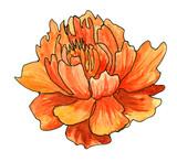 Orange flower - 111882852